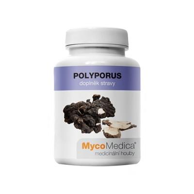 Polyporus Pilze